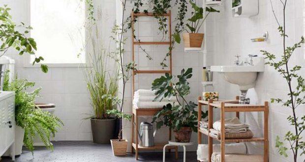 Apportez de la gaieté dans votre salle de bain avec de magnifiques plantes vertes.