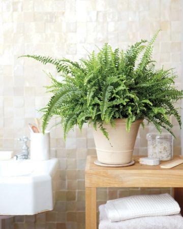 Elégante et très graphique, la fougère s'invite dans la salle de bains.