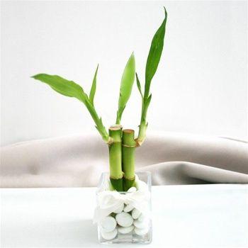Apportez une touche de zen à la salle de bains avec un bambou sur la baignoire par exemple.
