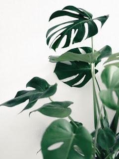 Des plantes vertes pour une salle de bains tendance - Plante pour salle de bain sans fenetre ...