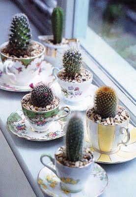 D'anciennes tasses de thé comme pots à cactus