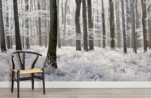 Une belle photo de nature en guise de papier peint pour une pièce apaisante.