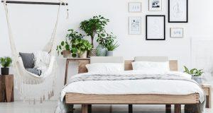 Plantes chambres